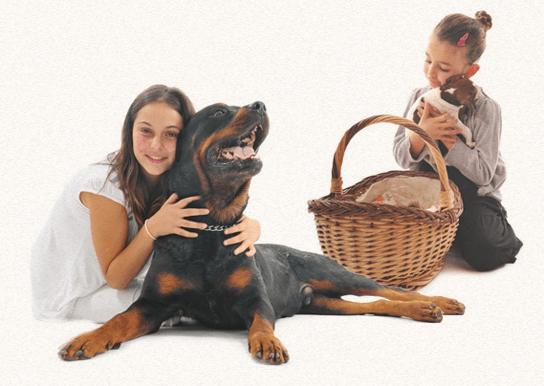 Mädchen kuscheln mit Hunden