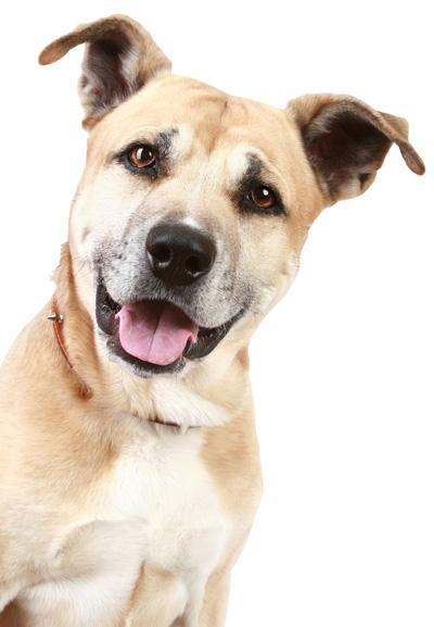 Frohlinder Hund