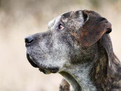 Trauriger Mischlingshund
