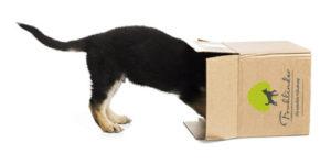 Frohlinder Karton mit Hund
