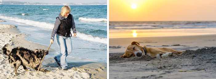 Hund Strand und Spaziergang - Hundestrand App